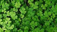 tretford Teppich blau, grün