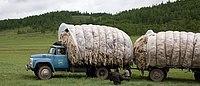 Transport Haar