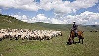 Herde und Hirte