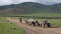 Umzug auf mongolisch