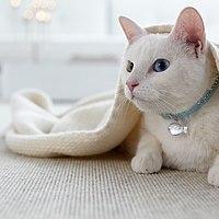 tretford Teppich Katze